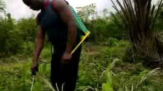 FARMING IN GHANA