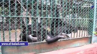 بالفيديو والصور .. 'حديقة الجيزة': الحيوانات بصحة جيدة