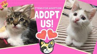 Kittens for Adoption: Arthur & Polly - Kitten Rescue LA - Adopt Now!