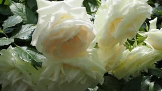 My garden OM-D E-M5m2 with M.ZUIKO DIGITAL ED 30mm F3.5 Macro thumbnail