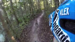 """Weimaraner Dog """"suki"""" Shreding North Creek Mountain Bike Trail At Alafia, Fl 10-10-15"""