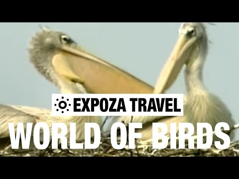 The World Of Birds (Africa) Vacation Travel Video Guide