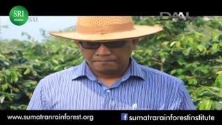 Mandheling Coffee: Agroforestry Coffee Development in Sumatra, Indonesia