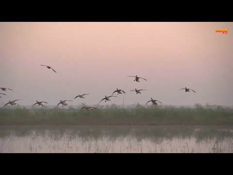 Epic Blue Wing Teal Shoot In Texas