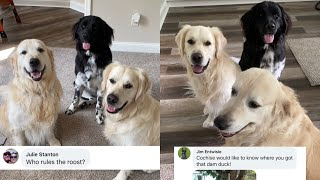 Dogs Answer Fans Questions