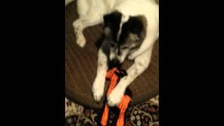 Heavy duty dog toy