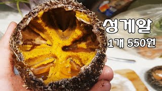 [일상속의 베트남] 알이 꽉찬 성게알 1마리에 550원…