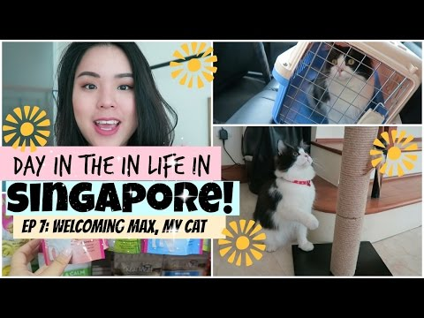 Day in the Life in Singapore! | Roseanne Vlogs Ep 7 | WELCOME MAX, My CAT! | Getting a Cat