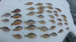 Зимняя рыбалка на каховском магистральном канале Р-8  11 02 17(Зимняя рыбалка на Р-8 каховском магистральном канале Подписываемся на канал и в группу в ВК , вы увидите..., 2017-02-11T18:28:56.000Z)