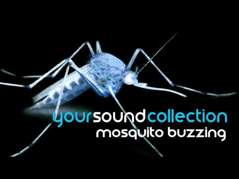 Sound Effect | Mosquito Buzzing | HQ