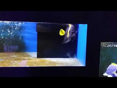 Arusetta asfur da oceano blu snc a Viterbo