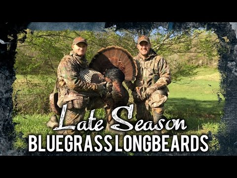 Hunting Late Season Turkey Tactics!