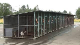Витебск Приют для животных Infograd 04 10 17