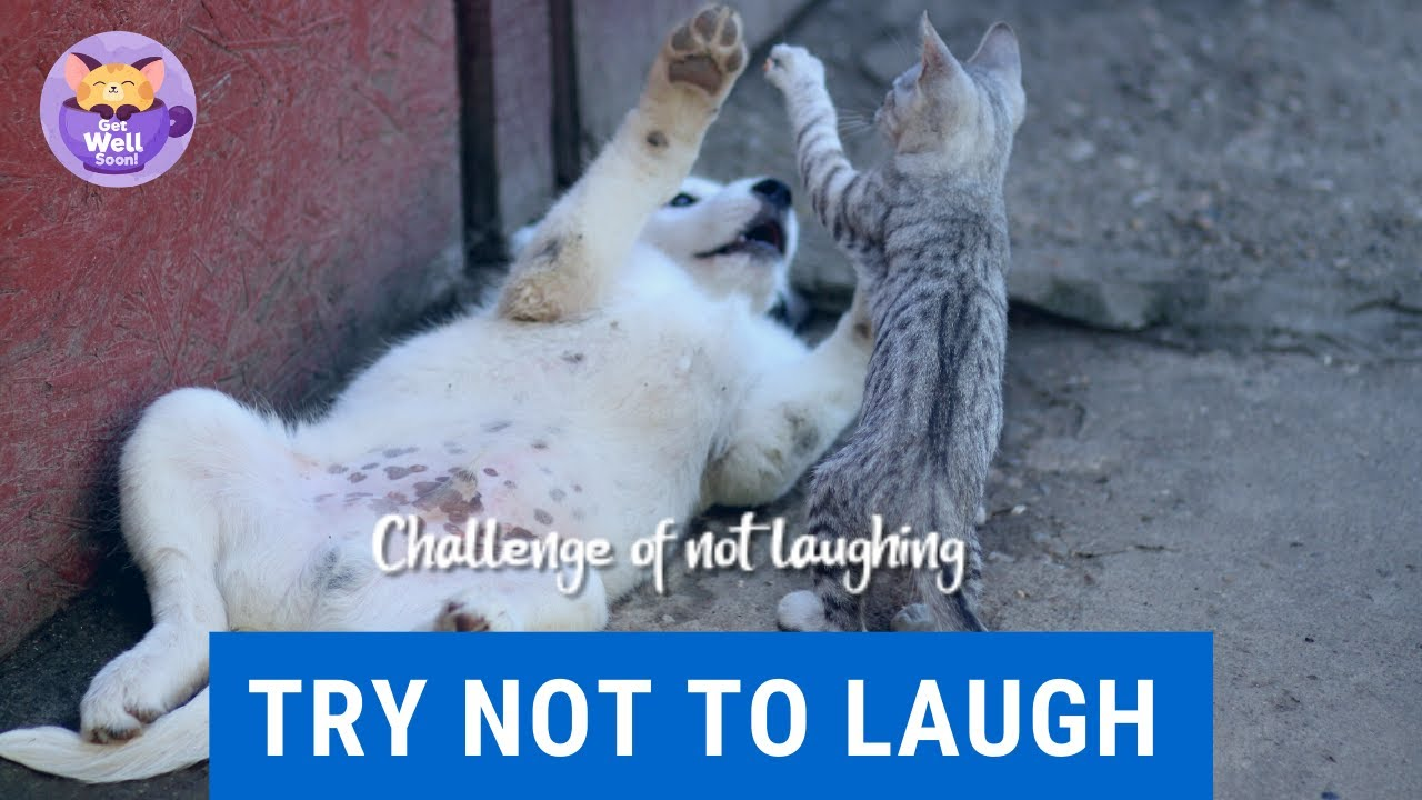 Try not to laugh or grin meme compilation FFFE