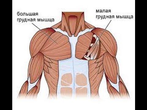 Грудная мышца болит
