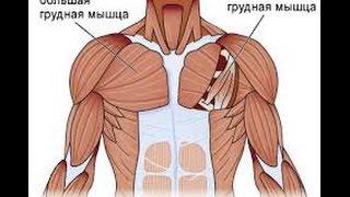 видео Большая грудная мышца. Функция большой грудной мышцы