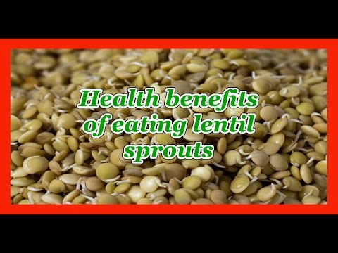 Health benefits of eating lentil sprouts