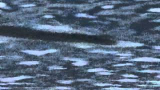THE LAKE SELJORD MONSTER EVIDENCE ?