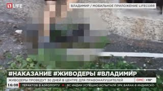 Суд изолировал подростков, убивших кошку во Владимире