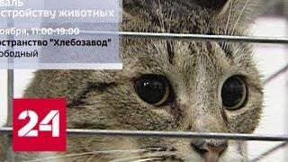 Выходные в столице: квест, географический диктант и поиск новых друзей - Россия 24