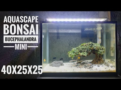 aquascape-bonsai-bucephalandra-mini