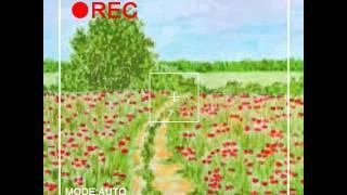 Prezentacja -łąka