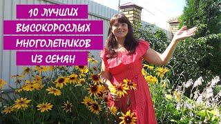 10 ЛУЧШИХ МНОГОЛЕТНИКОВ из СЕМЯН! МНОГОЛЕТНИЕ цветы и растения для сада.