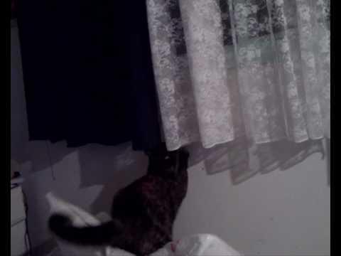 Cat Jumping Fail