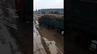 Гайсин буряк 2017
