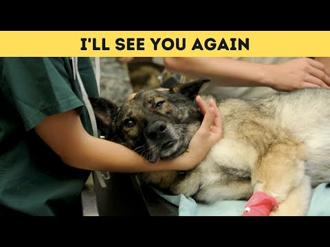 Heartbroken Vet Reveals: What Pets Do Minutes Before Being Put To Sleep
