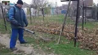 Осенние работы на винограднике . Подготовка виноградника к зиме .