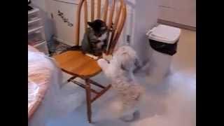 Собака пристаёт к коту