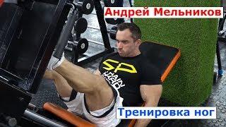 Андрей Мельников - тренировка ног перед чемпионатом Мира Elite PRO