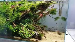 Dieses Aquarium konnt ihr euch auf der Garten&      Sascha Hoyer Aquascaping