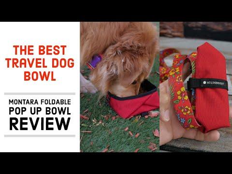 The Best Travel Dog Bowl? - Wildebeest Montara Foldable Pop Up Dog Bowl