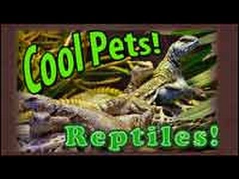 Reptile Care, Keeping Reptiles and Amphibian Pets