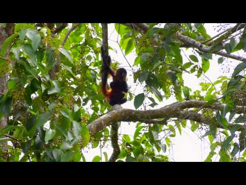 Sights and Sounds at El Remanso Lodge, Costa Rica