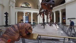 Chicago T-Rex visits the Field Museum and runs into an old friend.