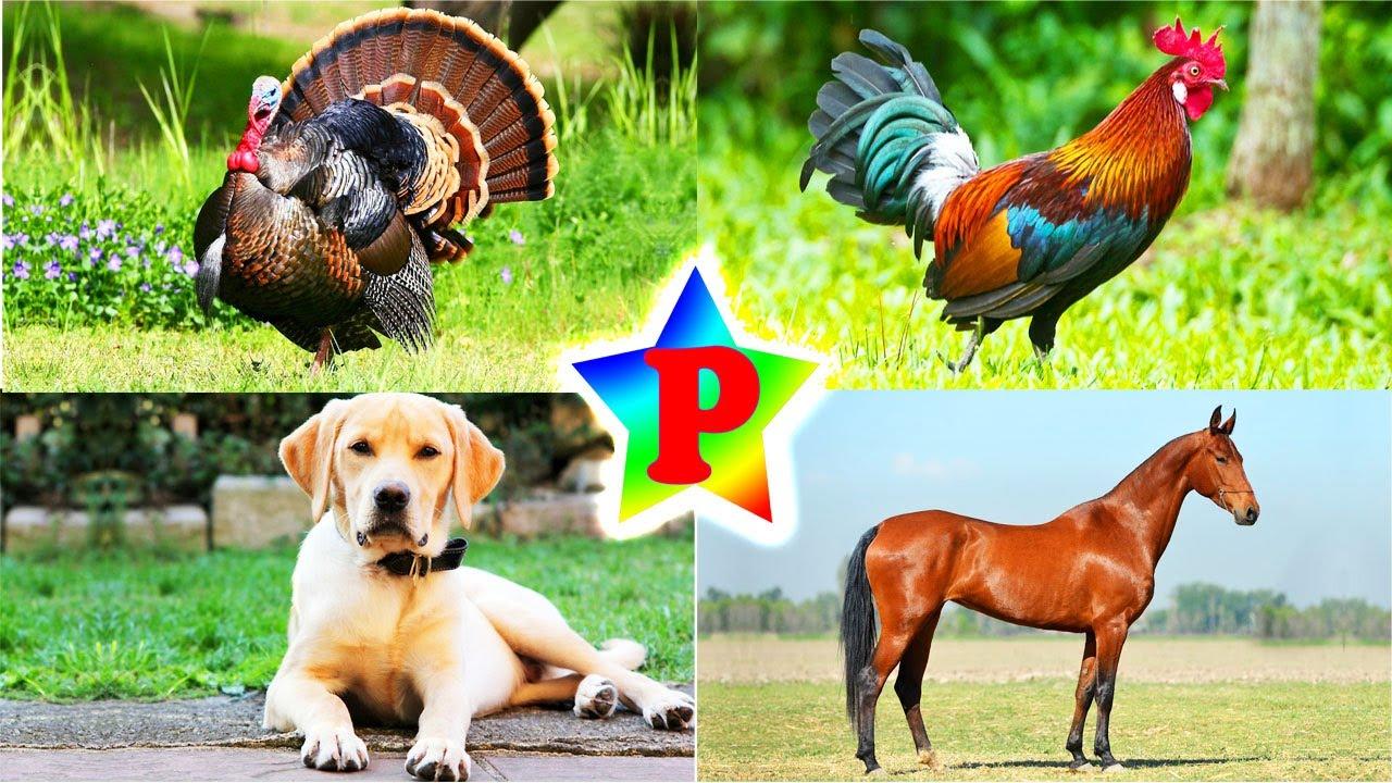 Домашние животные. Викторина для детей v25 - YouTube