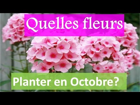 quelles fleurs planter en octobre youtube. Black Bedroom Furniture Sets. Home Design Ideas