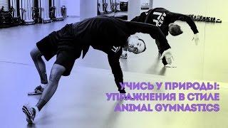 Учись у природы: упражнения в стиле Animal Gymnastics