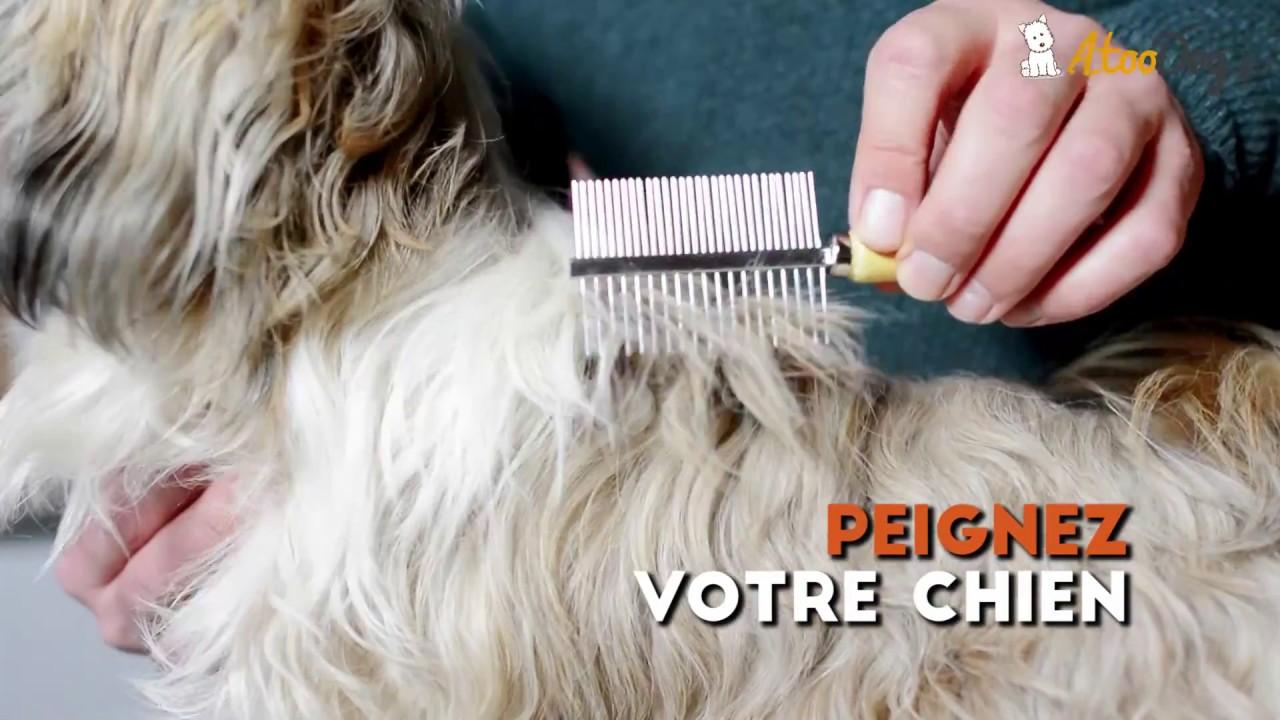Comment d m ler correctement les poils de son chien youtube - Comment enlever les vers d un chat ...