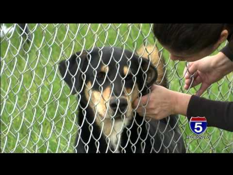 Dogs stolen in Grants Pass