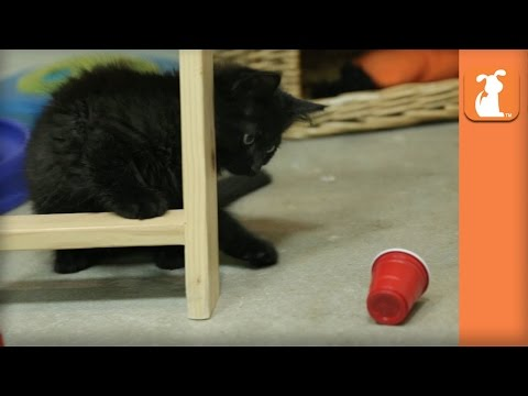 Kittens Go To College And Play Flip Cup - Kitten Love