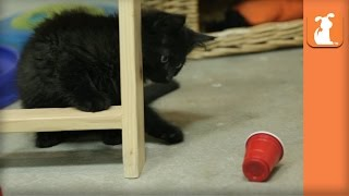Kittens Go To College And Play Flip Cup  Kitten Love
