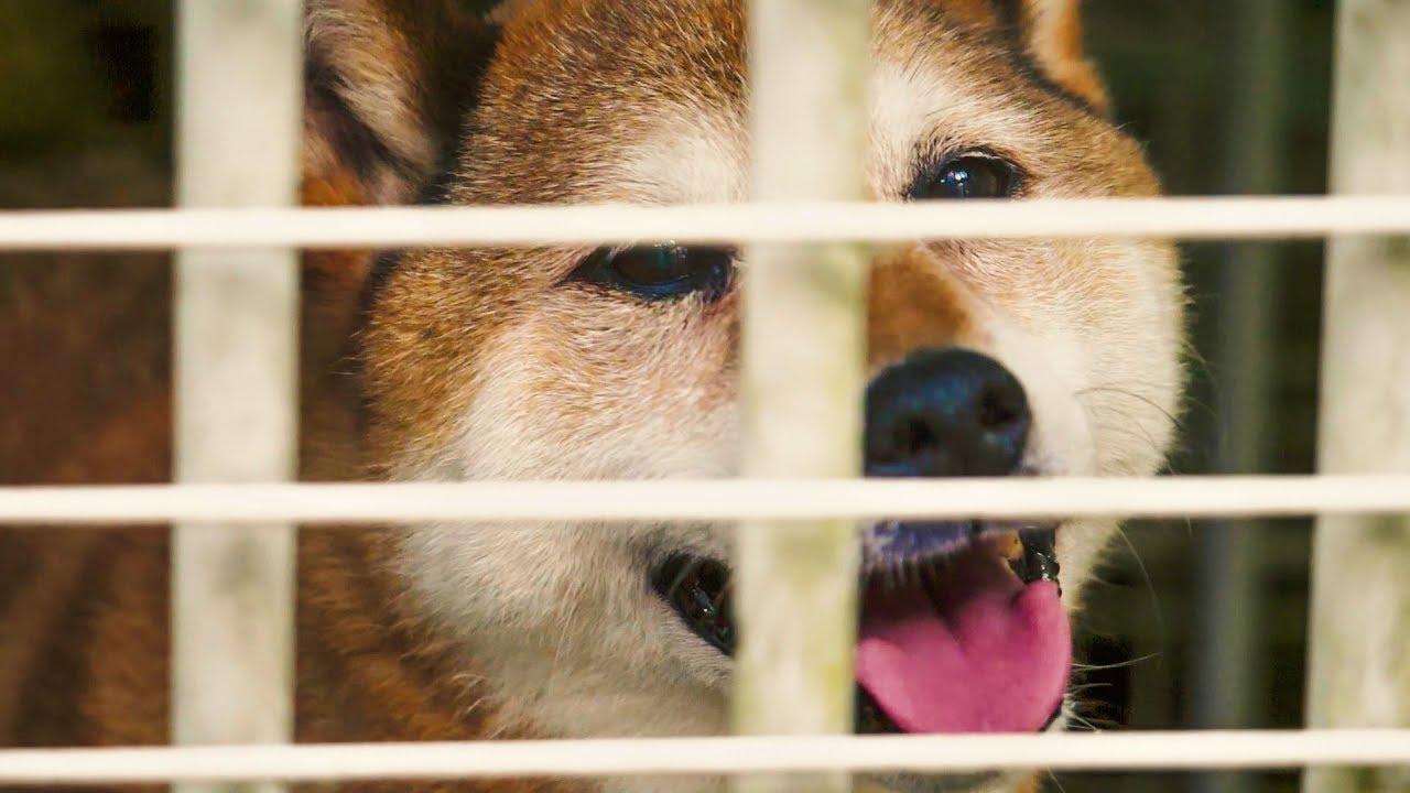 Jak w Japonii ratuje się psy
