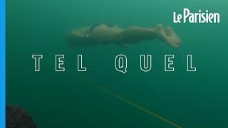 Il nage 80,9 m sous la glace en maillot de bain : les images du record du monde de David Vencl