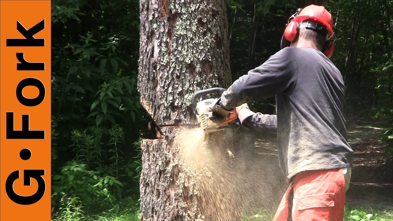 how to make a tree fall the right way