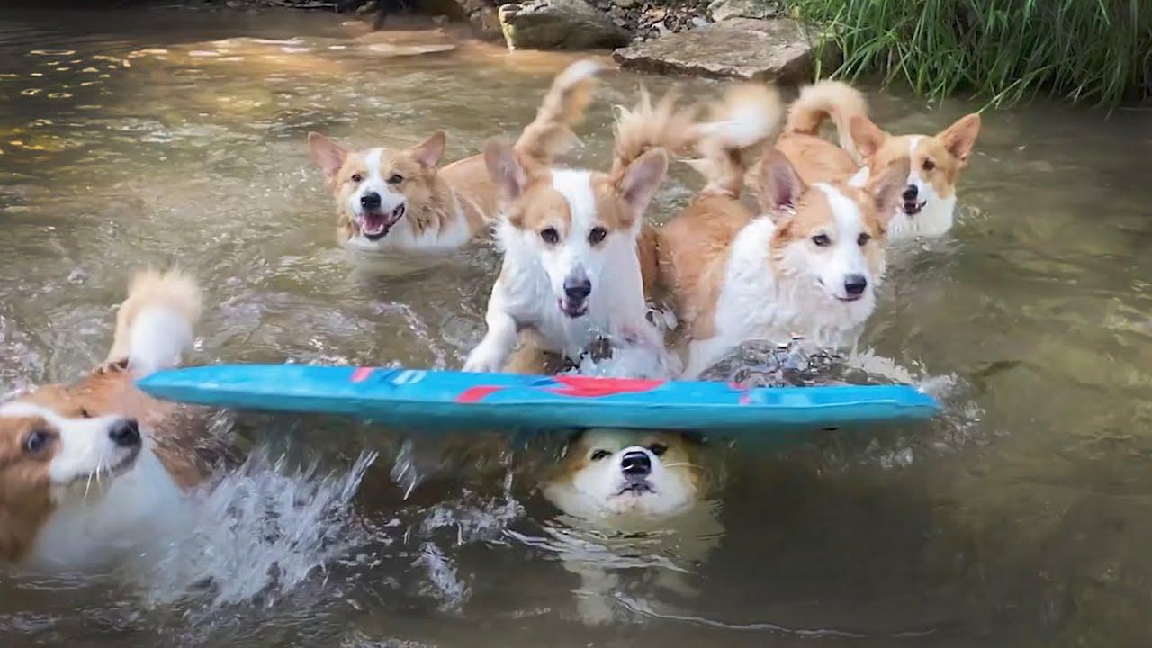 잘 노는 개 옆에 잘 노는 개 ㅣ A dog playing well beside a dog playing well