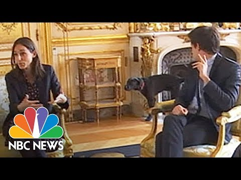 French President Emmanuel Macron's Meeting Interrupted By A Dog Taking A Leak   NBC News